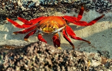 A crab at sun light