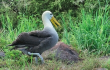 Happy Albatross