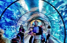 Shark tank tunnel