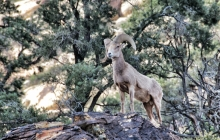 Wild life at red rock canyon