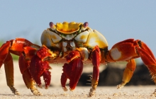 A crab on the beach