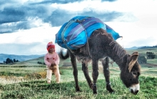 A baby walking by a donkey