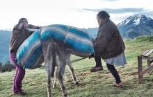 Uploading a heavy load on a donkey