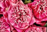 29 Flower arrangement, flower market, Thailand_DSC2987