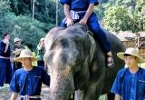 74 Riding the elephant bare bottom IMG_2531