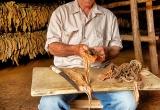 73 Cuttingand rollong tobacco leaves_DSC6355