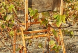 103 A chair in the wineyard_DSC9528