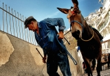 71 Donkey and leader_DSC9005