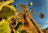 74 A cactus plant_DSC9080
