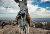 91 A donkey at megalo xori village DSC_0542