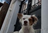 97 A friendly dog by the gate DSC_0650