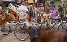 34 Varanasi 2015-11-15 DSC00642