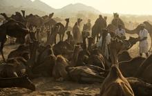 45 pushkar camel fair DSC1147