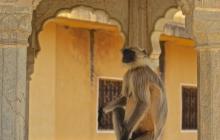 6 Jaipur 2015-11-18 DSC01043