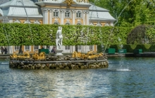 24. Ducks at the Peterhof